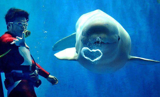 предложение руки и сердца в океанариуме